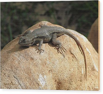 Rock Lizard Wood Print