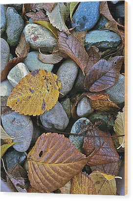 Wood Print featuring the photograph Rocks And Leaves by Bill Owen