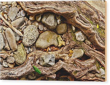 Rocks And Roots Wood Print by Christopher Holmes