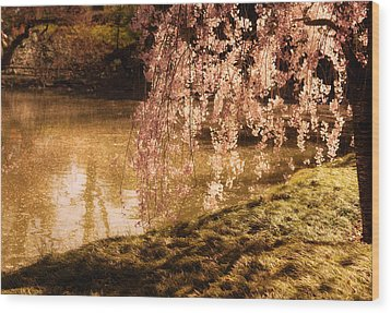 Romance - Sunlight Through Cherry Blossoms Wood Print by Vivienne Gucwa