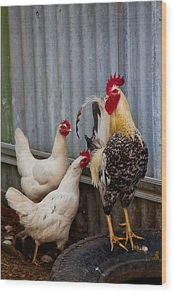 Rooster Rules Some Wood Print by Carole Hinding