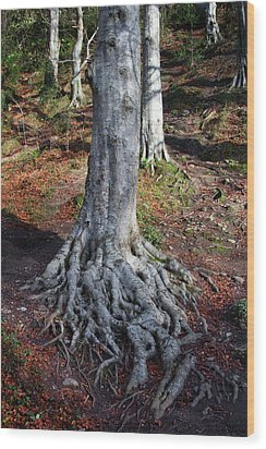 Rooted To The Spot Wood Print