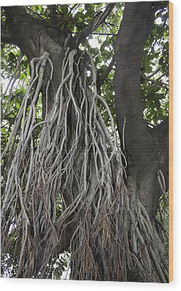 Roots From A Large Tree Inside Jallianwala Bagh Wood Print by Ashish Agarwal