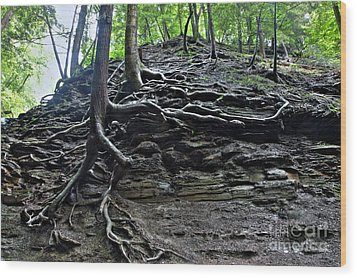 Roots In Shale Wood Print by Ted Kinsman
