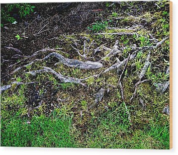 Roots Wood Print by Randall Weidner