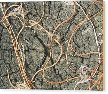 Rope Plant Wood Print by Todd Sherlock