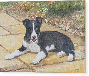 Rory Border Collie Puppy Wood Print