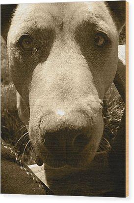 Roscoe Pitbull Eyes Wood Print by Kym Backland
