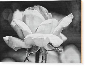 Rose 2 Wood Print by Rosanne Nitti