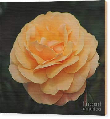 Rose 3 Wood Print by Vivian Christopher