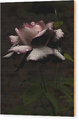 Rose After Dark Wood Print by Barbara Middleton