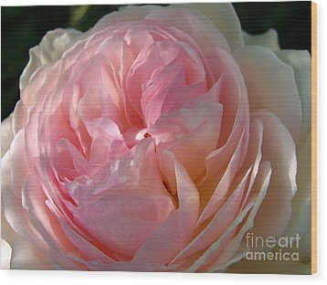 Wood Print featuring the photograph Rose Anglaise by Sylvie Leandre