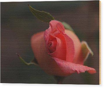 Rose Bud One Wood Print by Wanda Brandon