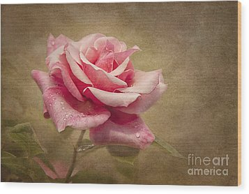 Rose Delight Wood Print by Cheryl Davis