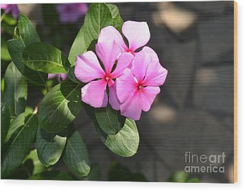 Wood Print featuring the photograph Rose Di Cristallo 2 by Kathleen Pio