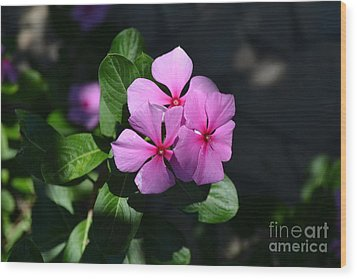 Rose Di Cristallo Wood Print by Kathleen Pio
