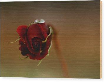 Rose Dream Wood Print by Gabriel Calahorra