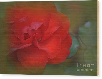 Rose Dream Wood Print by Mary Machare