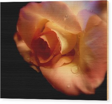 Rose Drops Wood Print by Cindy Wright