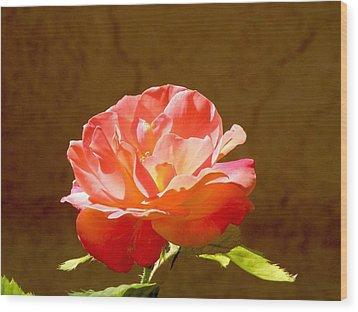 Rose Wood Print by FeVa  Fotos