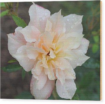Rose Wood Print by Glenn Lawrence