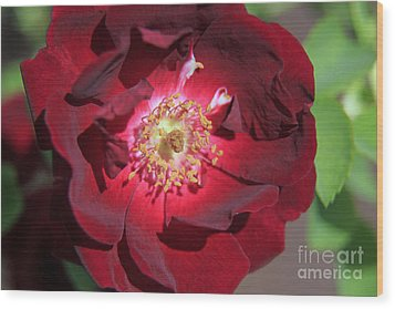Rose Glow Wood Print by Shawn Naranjo