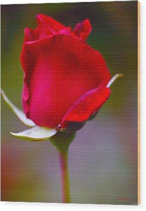 Rose I Wood Print by DiDi Higginbotham