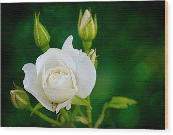 Rose I Wood Print