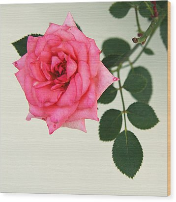 Wood Print featuring the photograph Rose In Full Bloom by Brooke T Ryan
