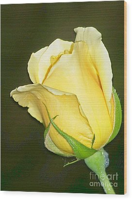 Wood Print featuring the photograph Rose Jaune by Sylvie Leandre