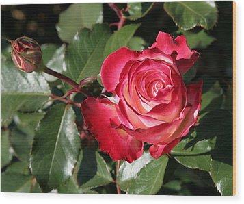Wood Print featuring the photograph Rose by Paula Tohline Calhoun