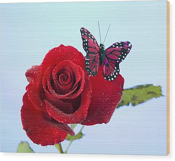 Rose Red Butterfly Isolated On Blue Wood Print by M K  Miller