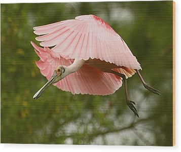 Wood Print featuring the photograph Roseate Spoonbill In Flight by Myrna Bradshaw