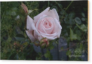 Roses In Bloom Wood Print by Garnett  Jaeger