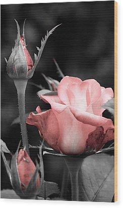 Wood Print featuring the photograph Roses In Pink And Gray by Michelle Joseph-Long