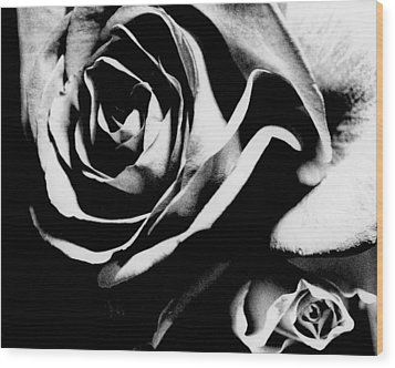 Roses Study 1 Wood Print by Lisa  Spencer