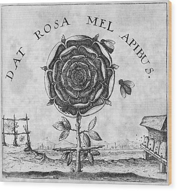 Rosicrucian Mystical Symbol Wood Print by Middle Temple Library