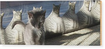 Rosie And Friends Wood Print by Barbara McGeachen