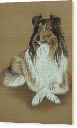 Rough Collie Wood Print by Patricia Ivy