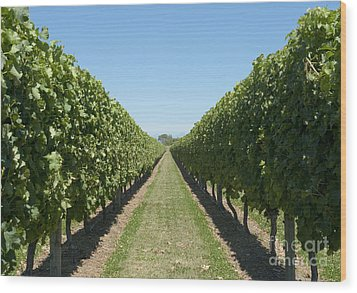 Row Of Grapevines In Vineyard Wood Print by Dave & Les Jacobs