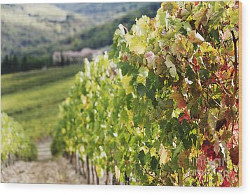 Row Of Grapevines In Vineyard Wood Print by Jeremy Woodhouse