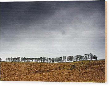 Row Of Trees In A Field, Yorkshire Wood Print by John Short