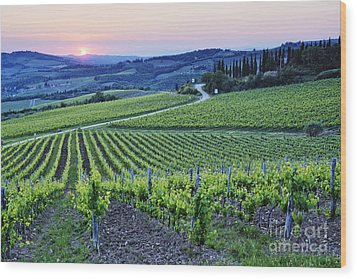 Rows Of Grapevines At Sunset Wood Print by Jeremy Woodhouse