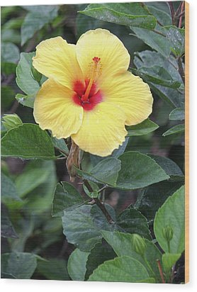 Wood Print featuring the photograph Royal Hibiscus by Craig Wood
