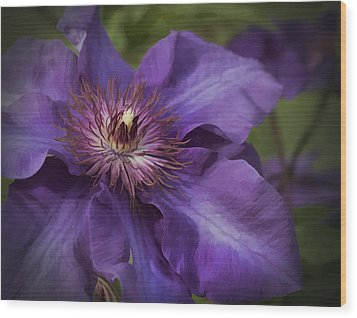 Royal Purple Jackmanii Clematis Blossom Wood Print by Kathy Clark