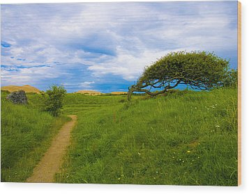 Rubjerg Path Wood Print