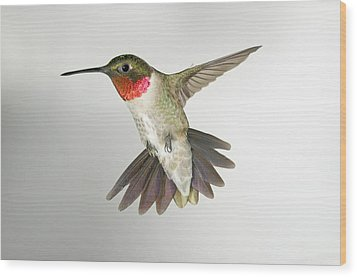Ruby Throat Hummingbird Wood Print by Gregory Scott