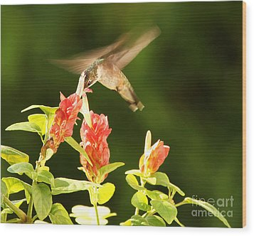 Wood Print featuring the photograph Ruby Throat Hummingbird by Luana K Perez