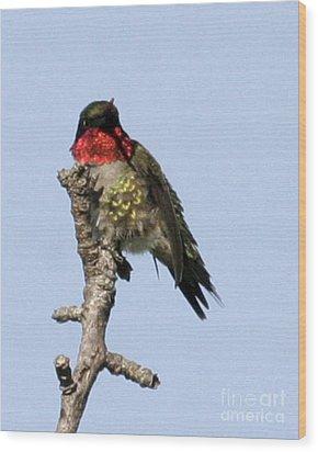 Ruby-throated Hummingbird Wood Print by Deborah  Smith
