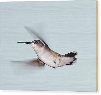 Ruby-throated Hummingbird In Flight Wood Print by Jim McKinley
